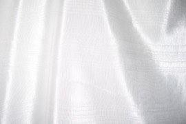 12_white_bengaline