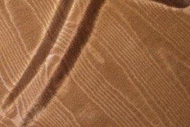 17_brown_bengaline